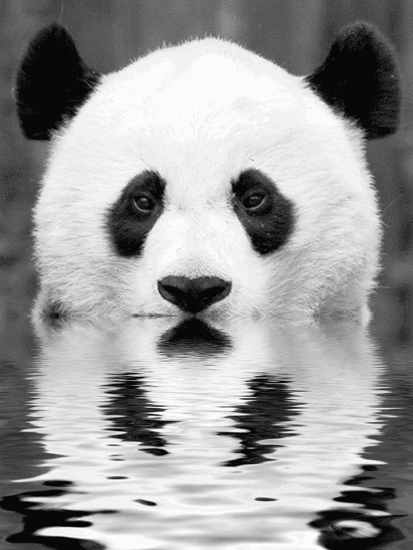 83886_panda-in-water.png_600x800